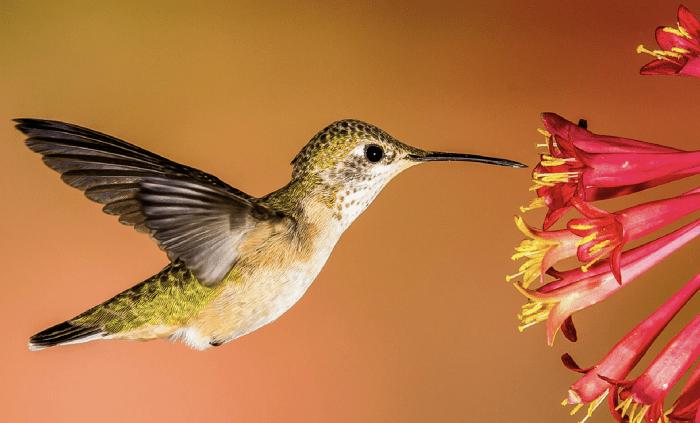 sylvia plath, Graced by the Hummingbird: Sylvia Plath's Legacy