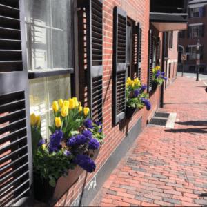 jeanne-blasberg-road-trip-tips-beacon-hill-cobblestone-street-tulips-in-windows
