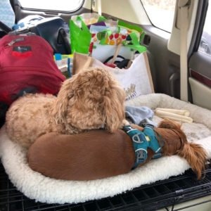 jeanne-blasberg-arizona-with-husband-and-dogs-returning-east-pandemic-road-trip